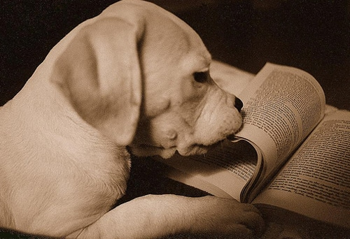 Puppy Reading