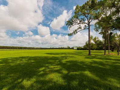 Grassy Pasture
