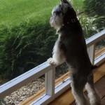 Miki Keeping Watch